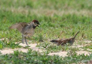 800px-Birds_Arguing_(3746624741)