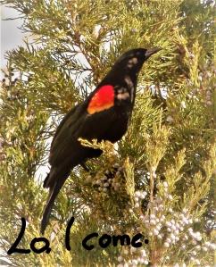 Birds 001 (2)_LI