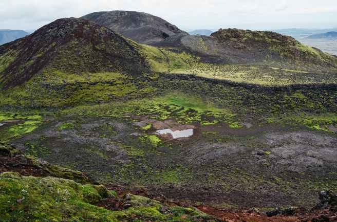 nature moss hills bog